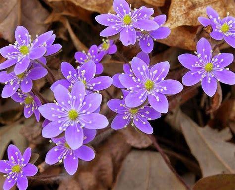 imagenes de flores del co 17 mejores ideas sobre flores ex 243 ticas en pinterest