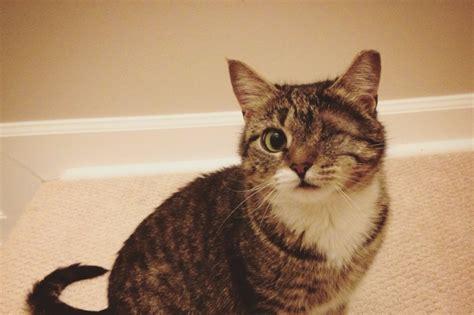 fundraiser  katie vogel save natty   eyed cat
