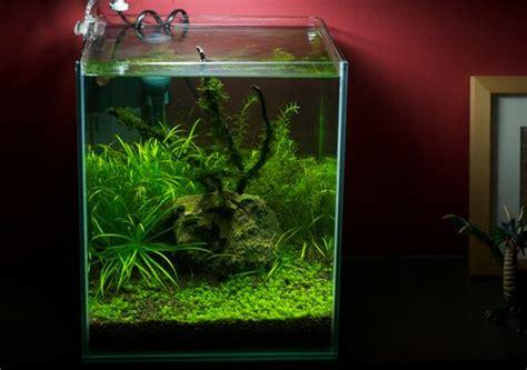 membuat aquascape murah atagalerinet