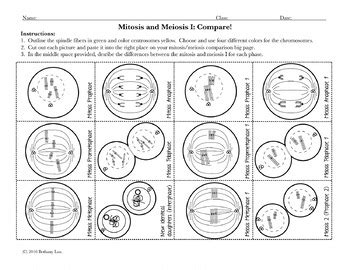 Meiosis Diagram Worksheet by Meiosis Worksheet Pdf Geersc