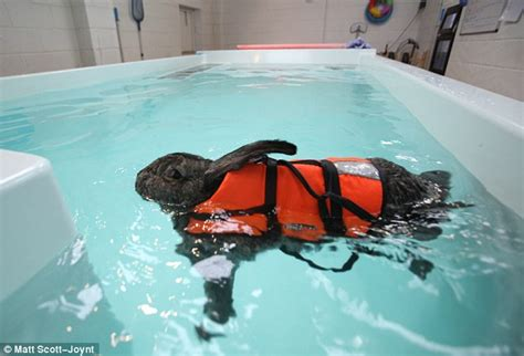 watership drown pered rabbit has water therapy to cure