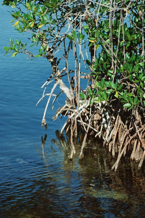 role  decomposers   mangrove ecosystem sciencing
