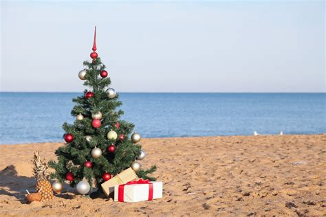 here s how to get a real tree for your christmas in dubai