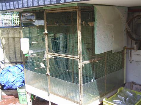 gabbia per scoiattoli fai da te help consigli per voliere