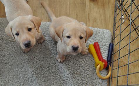 cuccioli in casa cose indispensabili per un cucciolo di in casa