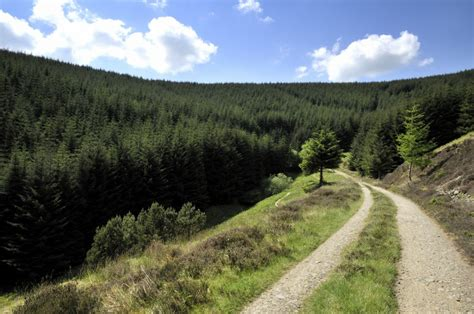 Mba Forest by Best Mtb Trails In Scotland And Northern The Mba