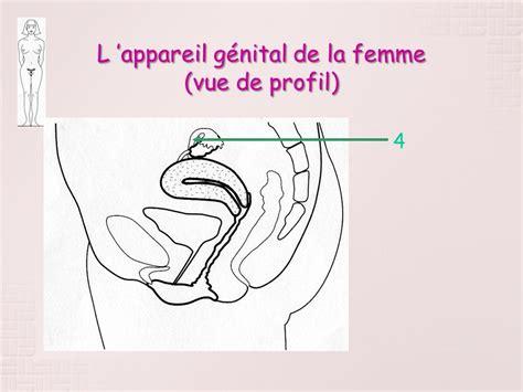 pavillon uterus l appareil g 233 nital de la femme ppt t 233 l 233 charger
