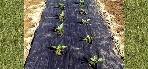 Planters Paper Mulch by Planters Paper Plastic Mulch Arch Greenhouses