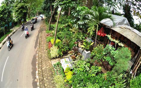 Terbatas Hydrogel Water Ungu p o i n t l a n d s c a p e pointscape landscape design build consultant nursery plant