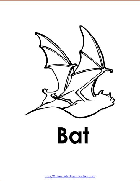 preschool bat coloring page free coloring pages of preschool bats