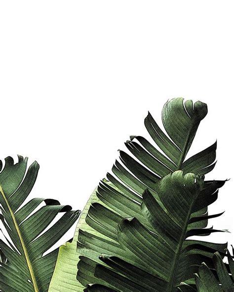 banana palm wallpaper tumblr kate maloneyy f l o r a l p l a n t pinterest