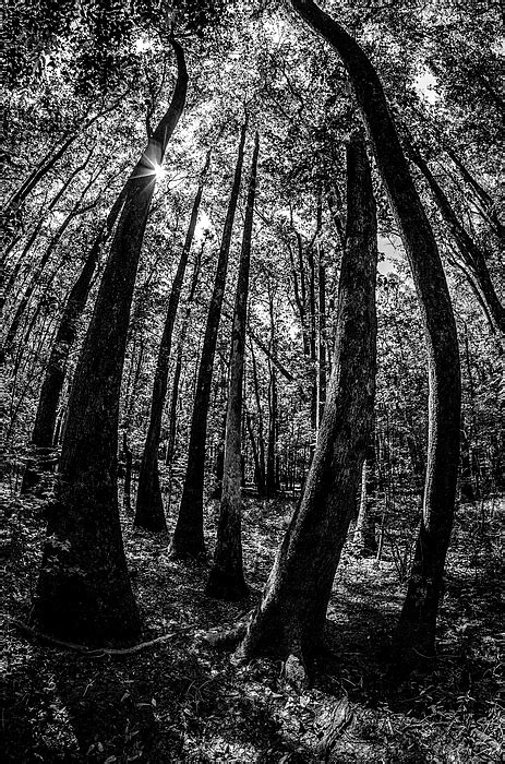 cypress forest and swamp of Congaree National Park in