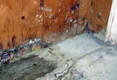 remove moisture from basement best 25 mold in basement ideas on basement