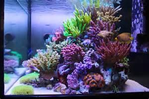 Fish Tank Bed Masanao Shibuya S Sps Reef Tank Is Bordering On Perfection