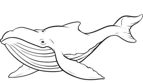 Whale Outline Coloring Page | whale outline black white lines creatures whales