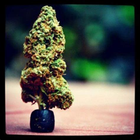 christmas tree kush great gift ideas for weedists weedist