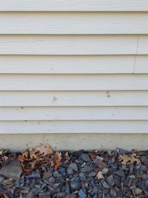 mold on house siding cleaning your house siding answerline iowa state university extension and outreach