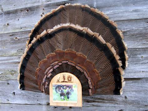 diy turkey fan mount fan with picture display turkey fan turkey