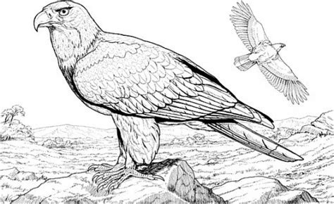 free coloring pages of birds of prey