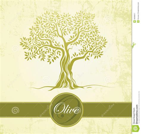 Olive Tree Olive Oil Vector Olive Tree On Vintage Paper For Labels Pack Stock Vector Vintage Family Tree Royalty Free Stock Images Image 32018779