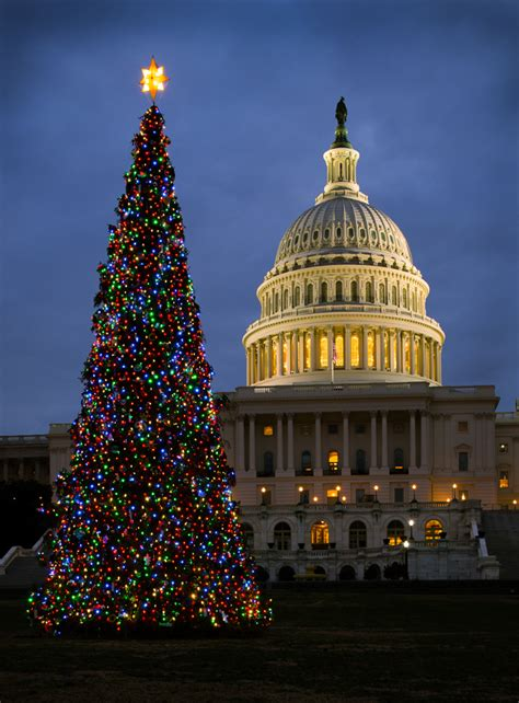 dc christmas trees capitol tree lights up washington architect of the capitol united states capitol
