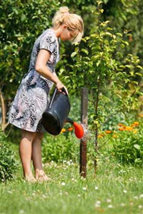Planter Des Pensées En Jardiniere you plant ideias para cultivos fevereiro 2012
