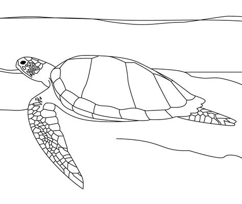 happy turtle coloring page best images collections hd for gadget windows mac android