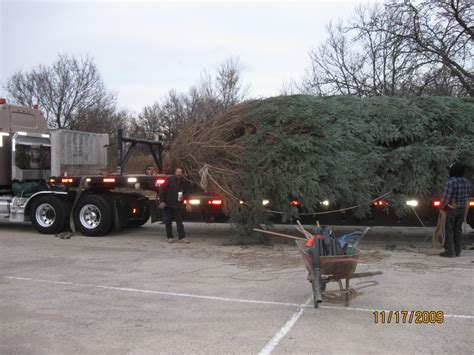 christmas tree delivery chicago tree delivery chicago lights decoration