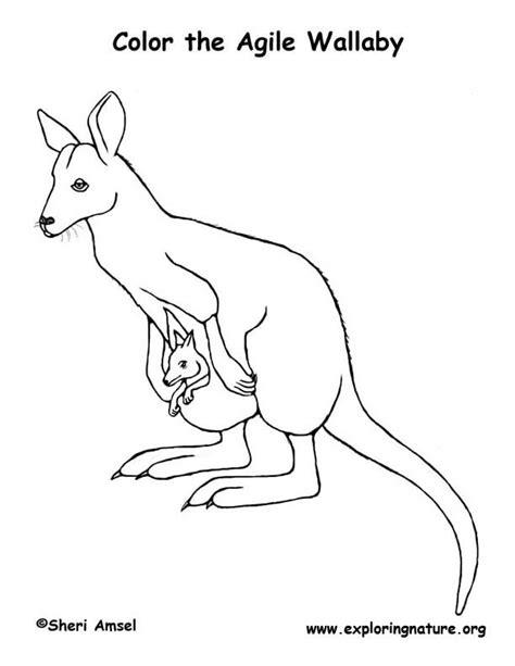 mammals coloring sheets