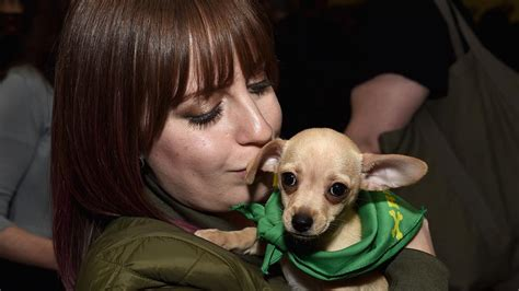 puppy bowl referee puppy bowl referee shares stories about this year s competitors where orlando