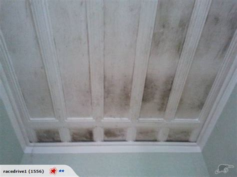 clean mould mildew from wallpaper ceiling wall 4l trade me