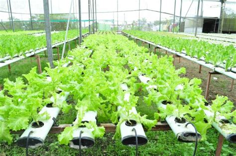 Hydroponic Growing : Research First, and Then Grow