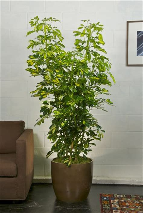 houston s online indoor plant pot store extra large 17 best images about living room decor on pinterest