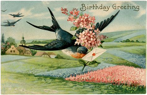 birthday swallow image extra pretty  graphics fairy