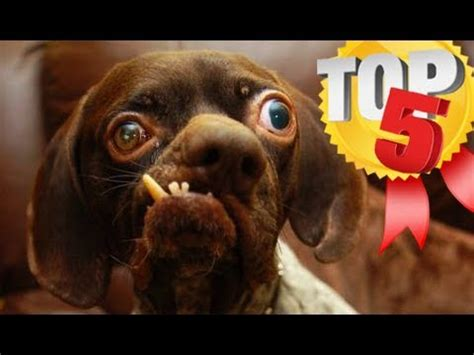 world's ugliest dogs (top 5!!) youtube