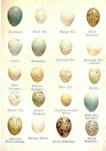 Backyard Birds Of Indiana Egg Identification Chart Field Guide To Fun Pinterest