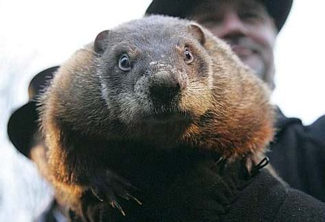 groundhog day groundhog name punxsutawney phil predicts longer winter on groundhog day
