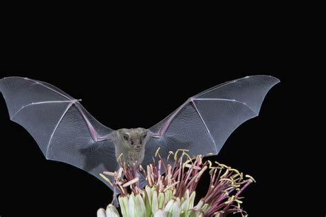 how do you get rid of bats in your backyard how to get rid of bats in the phoenix area