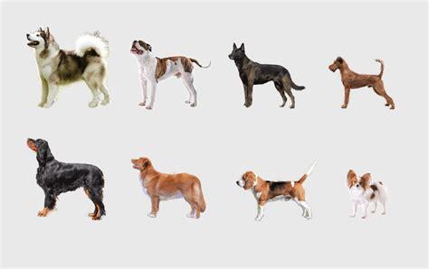 hunderassen mit bild rassehunde uebersicht hundeseitede