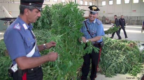 una tonnellata di cannabis a casanova sotto casa la