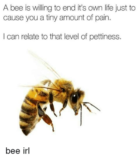 Bee Meme - a bee is willing to end it s own life just to cause you a