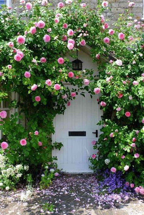 ideas for climbing rose supports climbing roses on house ideas