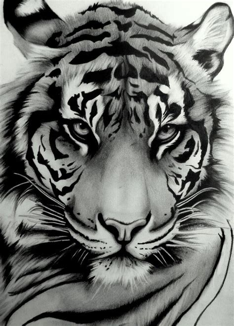 black and white tiger tattoo 25 best ideas about tiger drawing on tiger