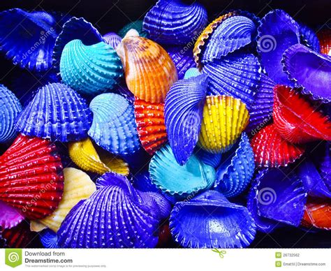 bold color shells stock photo image of shell yellow