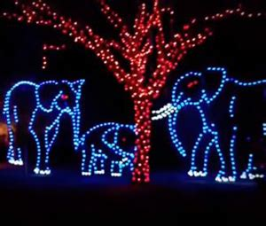 Top Holiday Lights Shows In South Florida 171 Cbs Miami Zoo Miami Zoo Lights