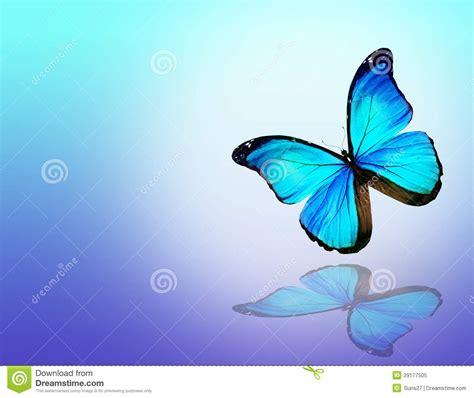 imagenes de mariposas azul turquesa mariposa azul en el fondo blanco stock de ilustraci 243 n