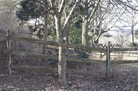 trees shrubs
