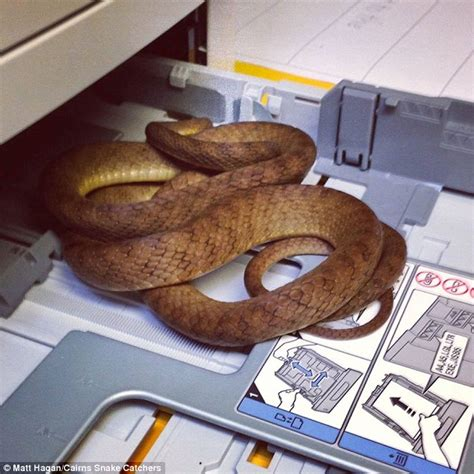 Industrial Vaccum Cleaner Brown Tree Snake Found Dead Still Biting Its Neck Outside