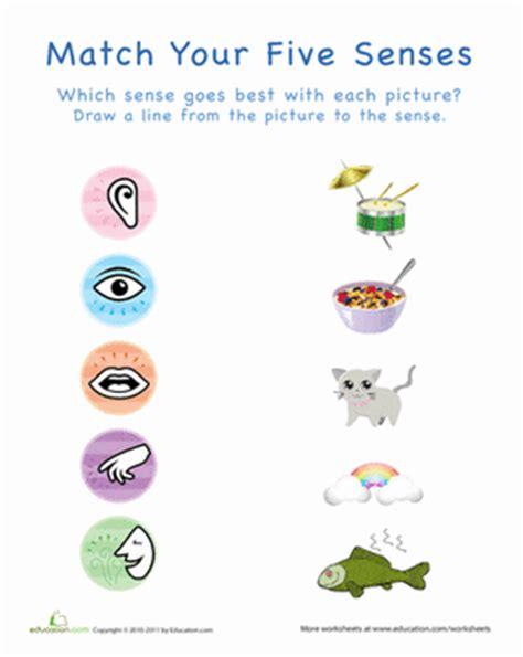 your five senses: matching 1 | worksheet | education.com