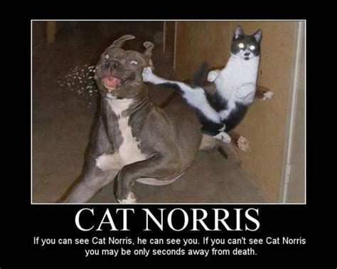 Cat Norris   Funny Pictures 320 Pic# 8